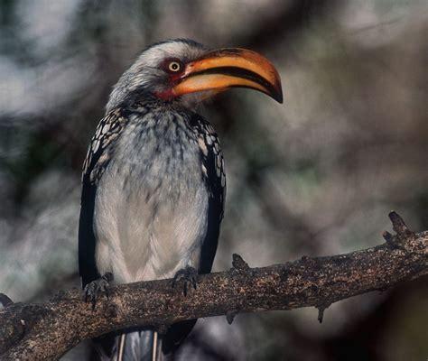 Imagenes de animales de la selva: FOTO PAJARO MUY RARO