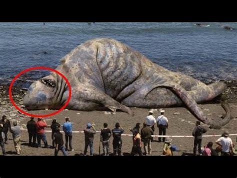 Imágenes de animales mas grandes del mundo   Imágenes