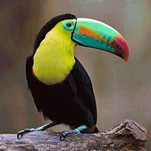 Imágenes de animales omnívoros | beautiful birds ...