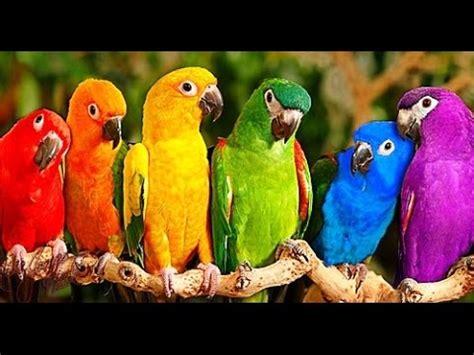 Imágenes de aves en peligro de extincion en el mundo   YouTube