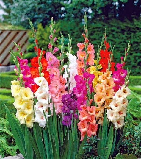 imagenes de flores exoticas con sus nombres