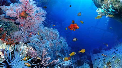 Imagenes De Naturaleza En Movimiento Gratis En Hd Gratis ...
