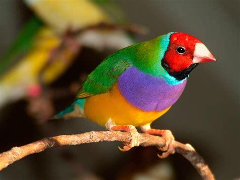 Imágenes de pájaros y aves exóticas   Aves Exóticas