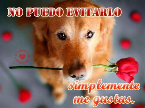 Imágenes de perros con frases cortas de amor para ...
