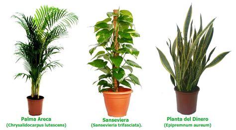 Imágenes de plantas   Imágenes