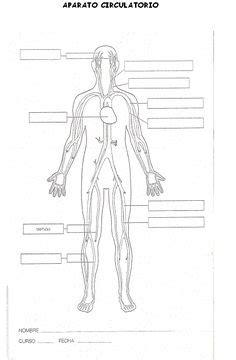 imagenes de rompecabeza a color del cuerpo humano de 6 ...