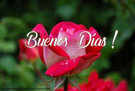 imágenes de rosas para desear buenos días | Buenos dias ...
