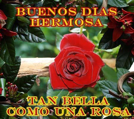 Imagenes de Rosas para Desear buenos dias – ROSAS DE AMOR