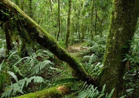 Imagenes de selvas   Imagenes de paisajes naturales hermosos
