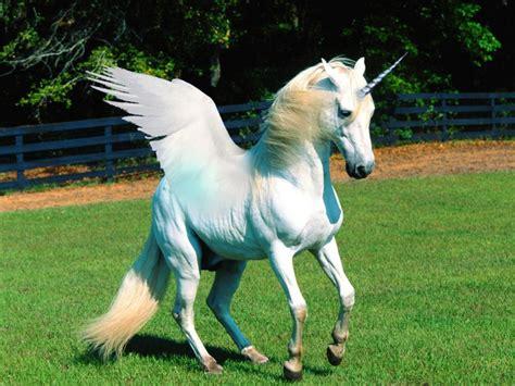 Imágenes de Unicornios REALES   Taringa! | Unicorn ...
