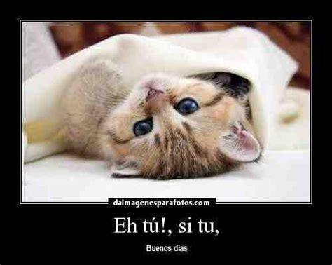 Imágenes graciosas de Buenos Días para compartir en ...
