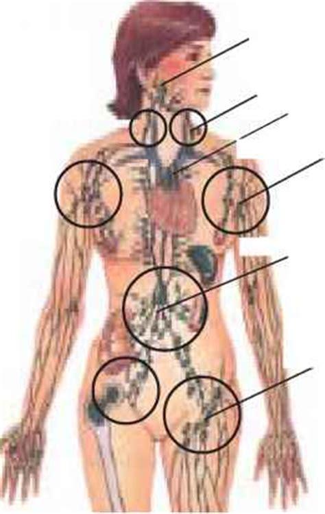 Immune System   Cosmic Healing   Energy Gates Qigong