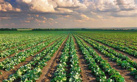 Importancia de la Agricultura Ecológica | Iberf Agroformación