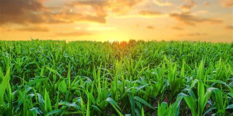 Importancia de la agricultura en México   México mi país