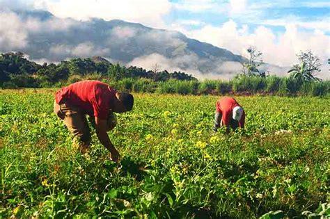 Importancia de la Agricultura en Venezuela en la ...