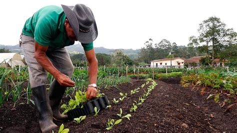 Importancia de la Agricultura Orgánica   TvAgro por Juan ...