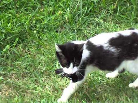 Impresionante Gato Cazando Un Pajaro   YouTube