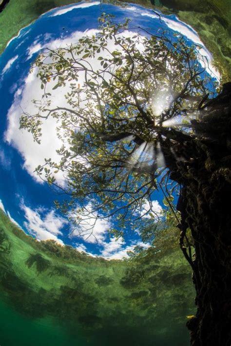 Impresionantes imágenes tomadas bajo el agua  Fotos ...