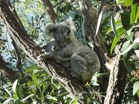 Iñaki en Australia
