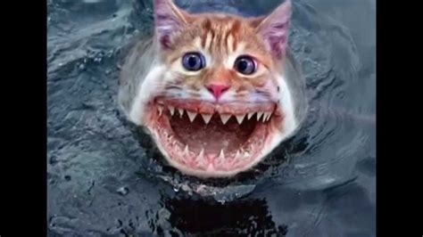 Incredibly funny Photoshopped pictures of Animals   YouTube