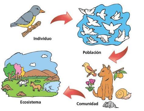 Individuo en Biología   Concepto, ejemplos, población ...