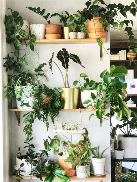 Indoor Plant Wall in 2020 | Indoor plant wall, Indoor ...