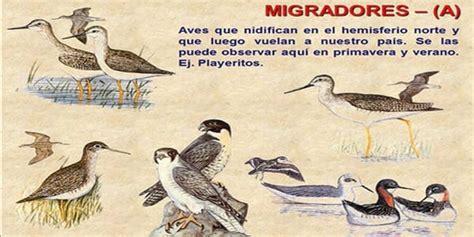 Influenza Aviar: Presencia de aves migratorias árticas en ...