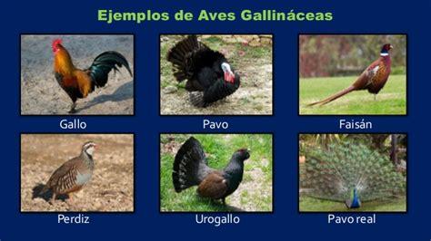 INFO AGRO: Clasificación de las Aves