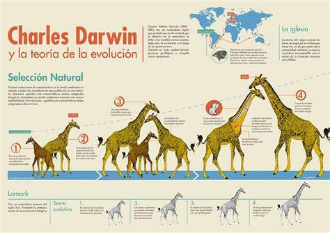 Infografia | Teoria de la evolucion, Evolucion, Teoría