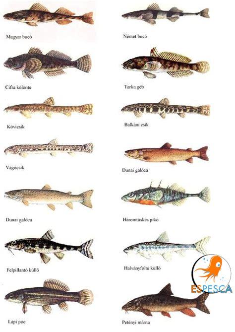 Infografías de peces 18 | Pesca | Fotos de peces, Peces de ...