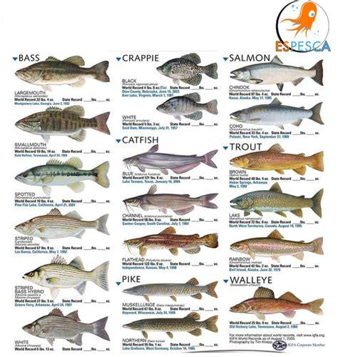 Infografías de peces 28 | Peces | Pesca, Consejos de pesca ...