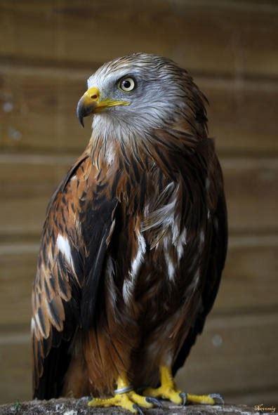 Infoplanet: El 23% de las aves españolas está en peligro ...