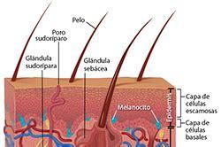 Información básica sobre el cáncer de piel   CDC