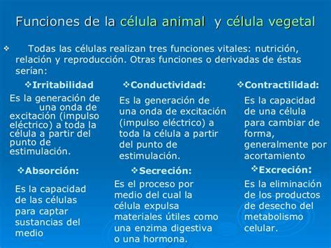 Informacion De Las Celulas Vegetal Y Animal   Compartir ...