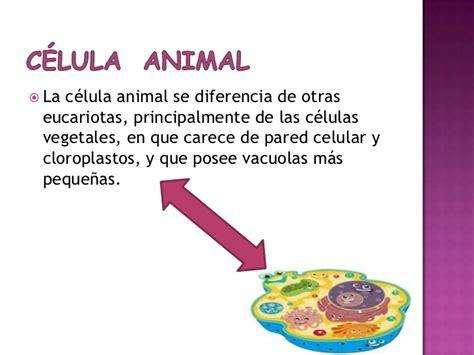 Informacion Sobre La Celula Animal   SEONegativo.com