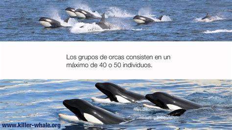 Información sobre las Orcas   YouTube