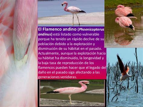 Informacion Sobre Los Flamencos   SEONegativo.com