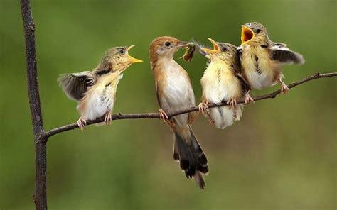 Información Sobre los Pájaros — Steemit
