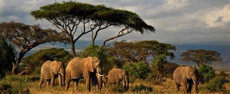 Información y datos de interés para haccer turismo en Kenya