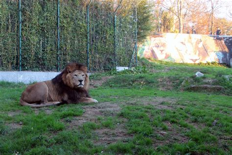 Iniciativa de Natal levou 3000 visitantes ao Zoo da Maia ...
