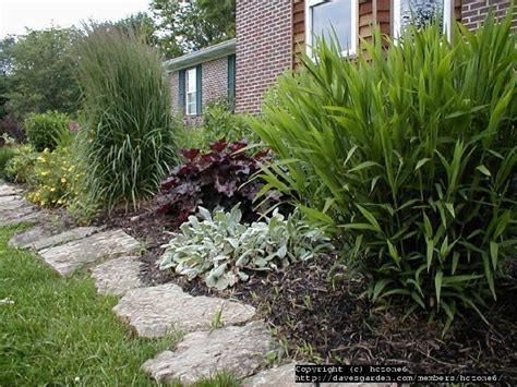 inland sea oats border   Google Search in 2020 | Plants ...