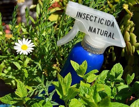 Insecticida Natural de ajo | Trucosnaturales.com