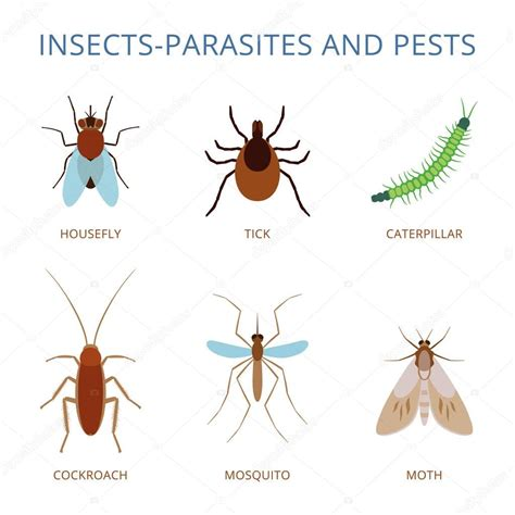 Insects parasites and pests — Stock Vector  ko.t.3208 ...