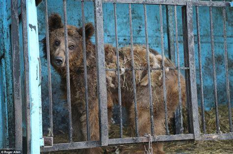Inside the world s worst zoo: In Armenia s Gyumri | Daily ...