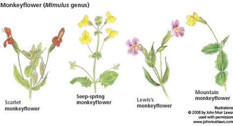 Inspirational Types Of Yellow Flowers Names   india s ...
