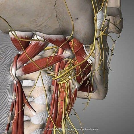 instagram   Nervio vago, Nervio, Intestinos