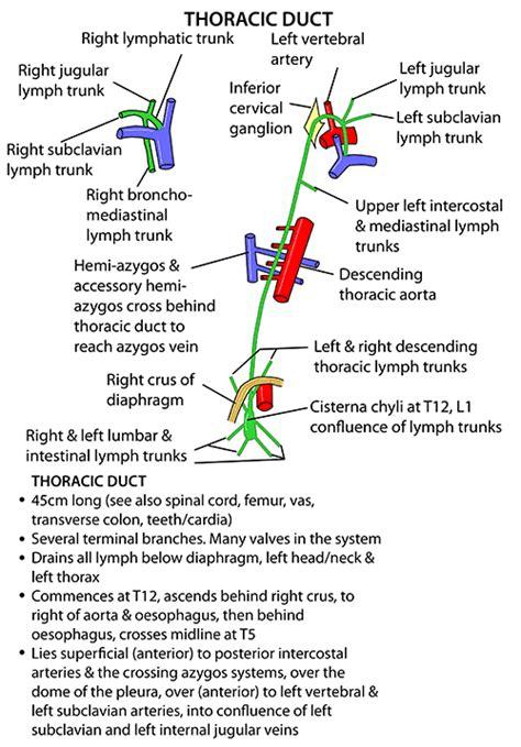Instant Anatomy   Thorax   Vessels   Lymphatics   Thoracic ...