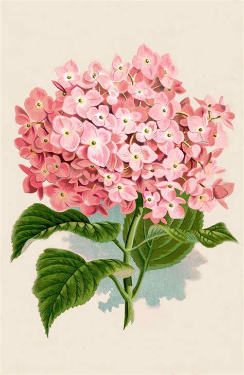 Instant Art Printable Download   Hydrangea Botanical Print ...