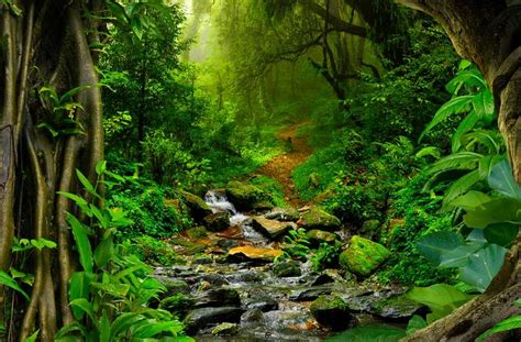 Interesting Amazon Rainforest Facts   Serious Facts