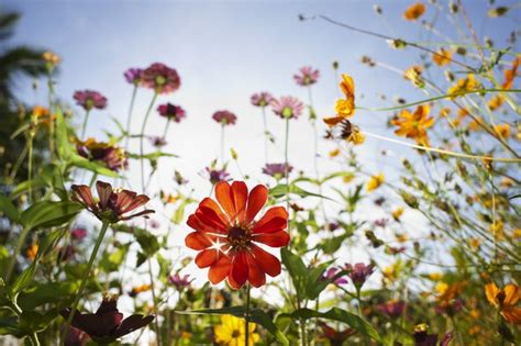 Interesting Facts About Wildflowers   Hunker